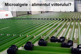 Sunt microalgele hrana durabila a viitorului